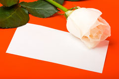 Macro white rose on red with blank card Royalty Free Stock Images