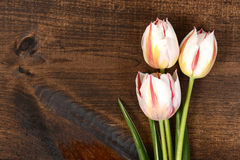 Macro White tulips on wood Stock Photos