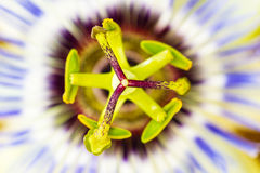 Macro of Wild Flower Insides from the Northwest Pacific of USA Royalty Free Stock Photos