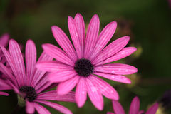 Macro of wild flowers Royalty Free Stock Photo
