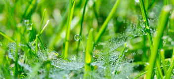 Macro Wilderness. Fresh green grass with small water droplets Stock Photos