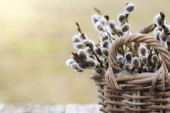 Macro of Willow Twigs Bouquet Royalty Free Stock Images