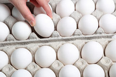 Picking egg Stock Photography