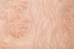 Macro of Wood Veneer Stock Photography