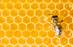 Macro of working bee on honeycells. Royalty Free Stock Photo