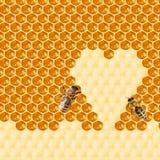 Macro of working bee on honeycells. Stock Image