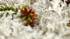 Macro world polar plant the white dead dry. stock video footage