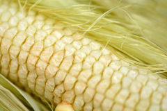 Macro of yellow corn background, healthy and tasty food Royalty Free Stock Image
