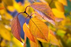 Macro of yellow leaves Stock Photos