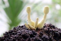 Macro of Yellow mushroom. Stock Image