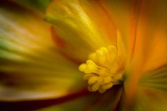 Macro of a yellow and red flower. Abstract macro of a yellow spring time flower Royalty Free Stock Images