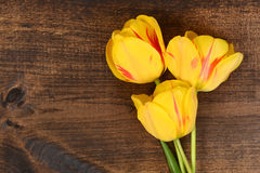 Macro Yellow tulips on wood Royalty Free Stock Photos