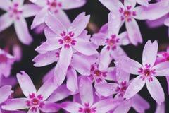 macro zachte groene bloemen Stock Fotografie