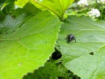Macro Zwart insect stock fotografie