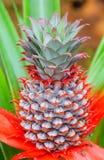 Macrobanaanbloemen royalty-vrije stock afbeelding