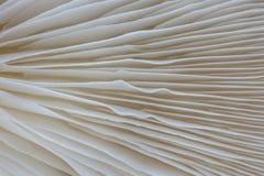 Macrobeeld als achtergrond van sajor-Cajupaddestoel Royalty-vrije Stock Fotografie