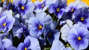Macrobeeld van bloemen in een tuin stock videobeelden
