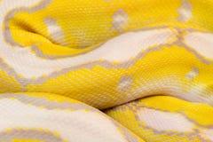 Macrobeeld van een gele slang Stock Fotografie