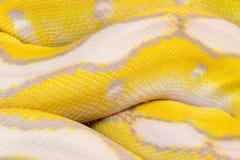 Macrobeeld van een gele slang Stock Foto's
