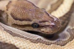 Macrobeeld van een slang Stock Foto