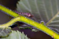 Macrobeeld van muggen die op een installatie zitten stock foto's
