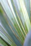 Macrobladeren van Yuccainstallatie, royalty-vrije stock fotografie