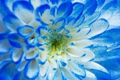 Macrobloemblaadjes van een bloem Stock Foto's