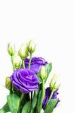 Macroboeket van purpere bloemen Stock Foto
