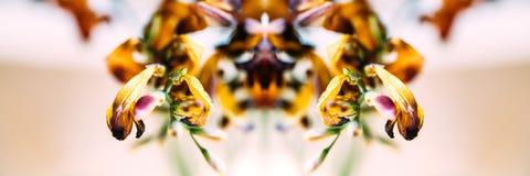 Macroclose-upfoto van een bloem van de fresia droge dode fresia Royalty-vrije Stock Foto