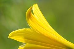 macrocosm Предпосылка, концепция и идея красивейший желтый цвет цветка жизнь новая Стоковая Фотография RF