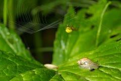 macrocosm Eine Spinne und der Nachbar eine Schnecke in einem Häuschen Wilde Natur Insekte und Blumen stockfotografie