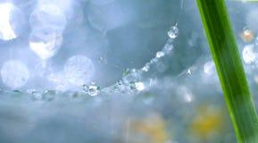 Macrodauwdalingen op spinneweb Close-up een daling van water met het fonkelen bokeh op blauwe vage achtergrond Abstracte zachte a Royalty-vrije Stock Fotografie