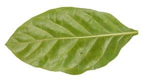 Macrodecoratie van het blad de groene blad Stock Foto's