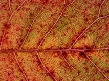 Macrodetail van een de herfstblad stock fotografie