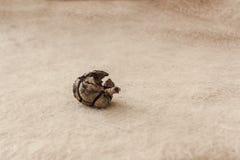 Macrodetail van een kleine bruine de herfstananas op roomachtergrond royalty-vrije stock foto
