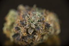 Macrodetail van van de doodsbubba van de cannabisknop de marihuanaspanning op D Stock Afbeelding