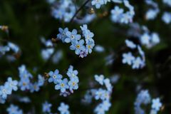 macroflower royalty-vrije stock foto