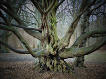 Macrofoto's met landschapsachtergrond Maart de eerste de lentedagen in het Park met decoratieve bomen royalty-vrije stock foto