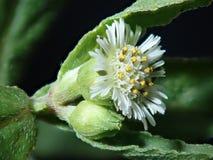 Macrofoto van bloem stock afbeelding