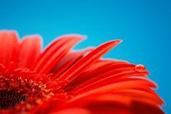 Macrofoto van bloem met waterdaling Stock Afbeelding