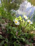 Macrofoto van bloemen in aard dichtbij meer stock afbeelding