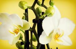 Macrofoto van de gele orchidee stock afbeelding