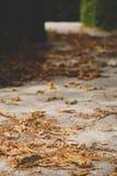 Macrofoto van de herfst gele bladeren van zonnig stock foto's