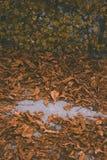 Macrofoto van de herfst gele bladeren van zonnig stock afbeelding