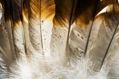 Macrofoto van de Indische Veren van Native American stock foto