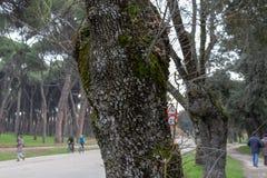 Macrofoto van een boomstam stock afbeeldingen