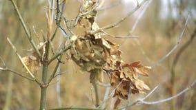 Macrofoto van gevallen bladeren in de herfst bos, ondiepe dof stock videobeelden