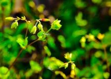 Macrofoto van uiterst kleine bloemen Stock Fotografie