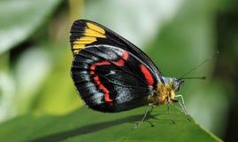 Macrofoto van vlinder royalty-vrije stock foto's