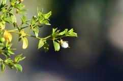 Macrofoto van witte bloem royalty-vrije stock foto's